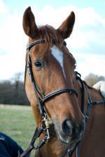 Kůň v údolí Stubaital